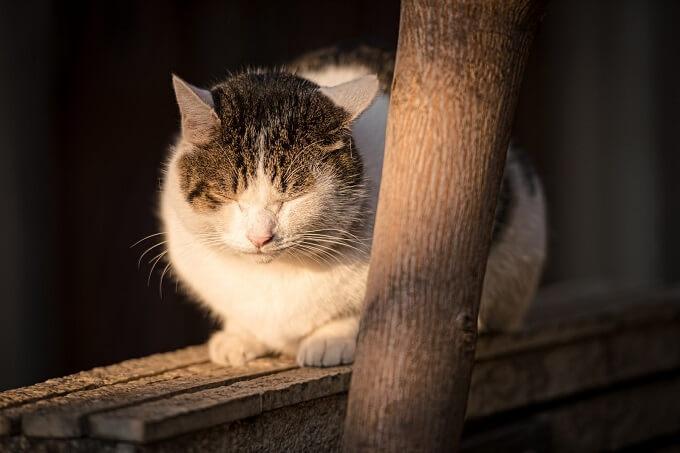 暖を取っている猫