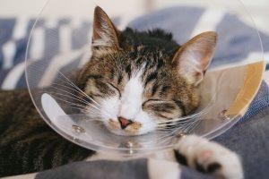 エリザベスカラーをしながら寝ている猫