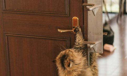ドアノブ猫