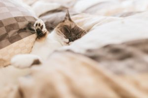 ベッドで眠っている猫