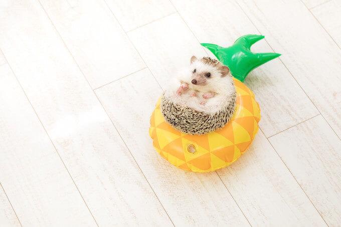 パイナップルのクッションに座っているネズミ