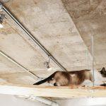 天井に知己猫