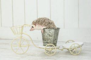 ハリネズミと自転車