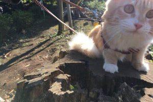 丸太の上で遊ぶ猫