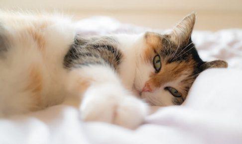 ベッドの上で寝ている猫