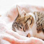 タオルにくるまっている猫