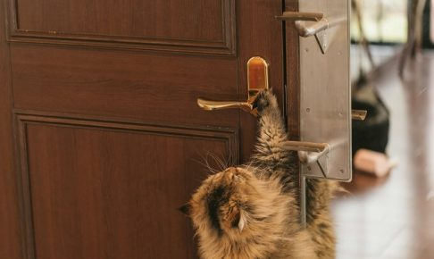 ドアノブと猫