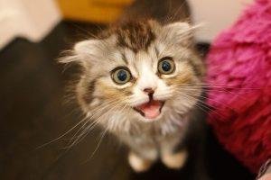 アップの猫