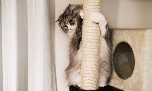 猫タワーと猫