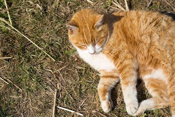 日向ぼっこしている猫