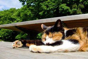 昼寝をしている猫