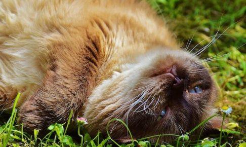 寝転がってくつろいでいる猫