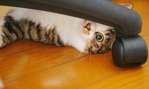 隙間から猫
