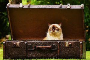 箱に入っている猫