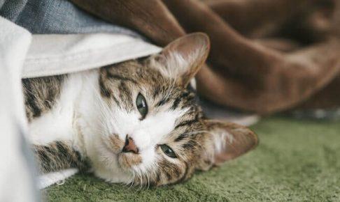 今にも寝そうな猫