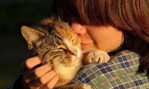 抱きかかえられている猫