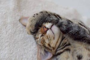 眠そうにしている猫