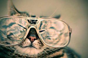 メガネをかけている猫