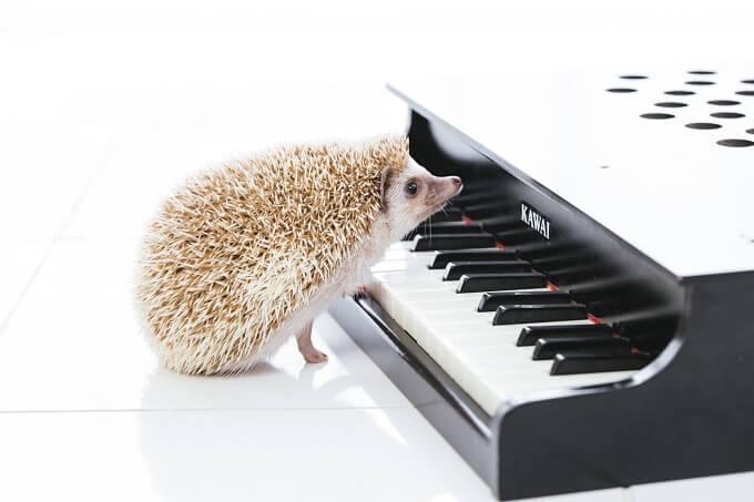 ハリネズミとピアノ