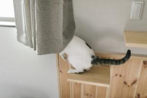 カーテンに埋まっている猫
