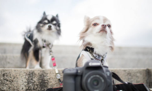 犬と猫とカメラ