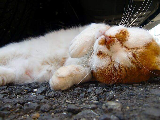 寝返りをしている猫