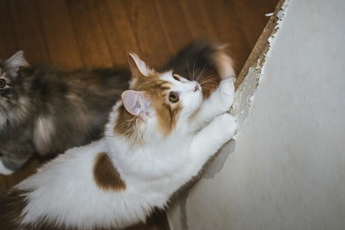 壁をひっかいている猫